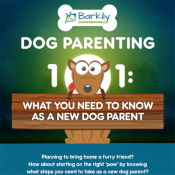 Dog Parenting: Tips & Stats You'll Want to Know About