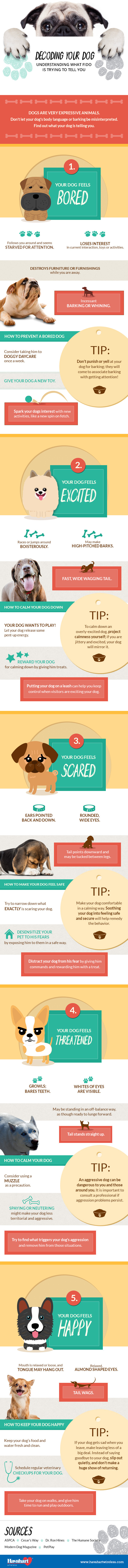 Decoding Your Dog: What Fido is Trying to Tell You