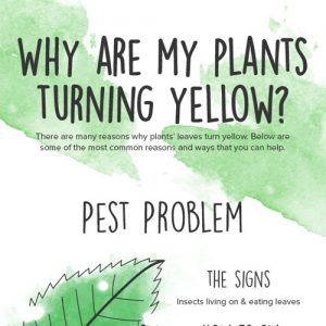 Why your Plant's Leaves are Turning Yellow