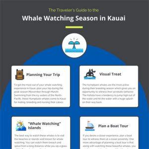 whale-watching-season-in-kauai-fimg