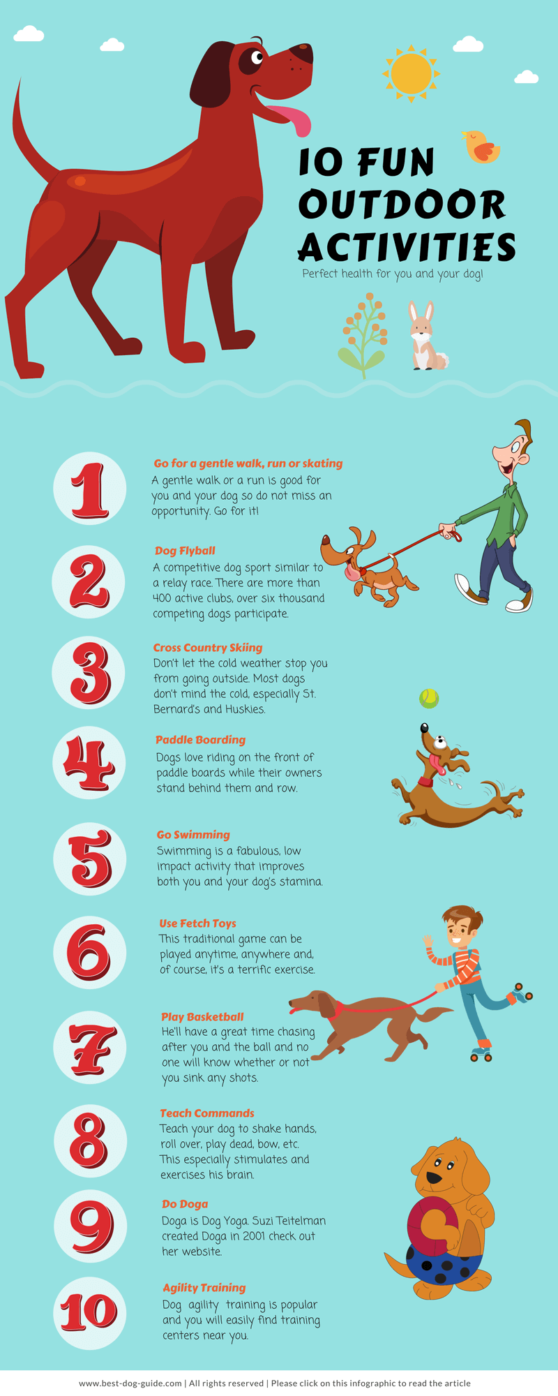 Fun Things To Train Your Dog To Do