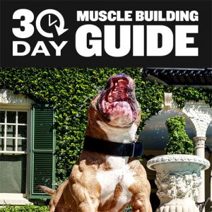 dog-muscle-building-fimg