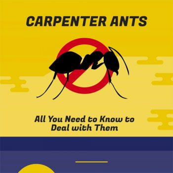 what-do-carpenter-ants-fimg