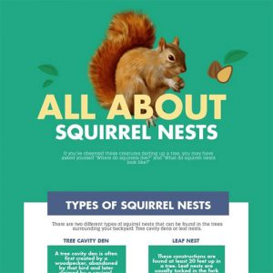all-about-squirrel-nests-fimg