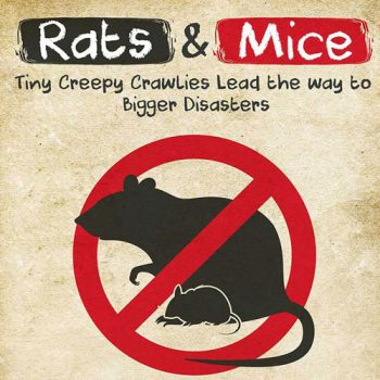 rats-mice-infographic-fimg