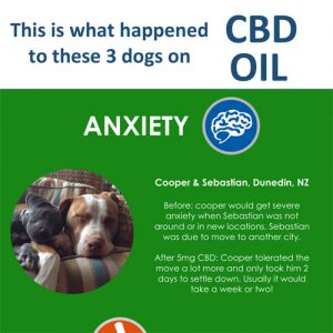 what-cbd-oil-did-for-these-3-dogs-fimg