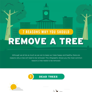 7-reasons-remove-tree-fimg