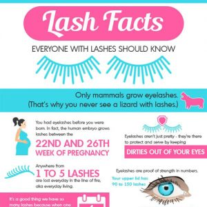 eyelash-facts-fimg