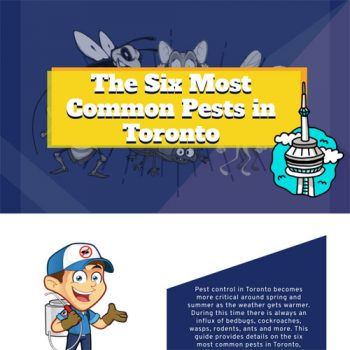 most-common-pests-in-toronto-fimg