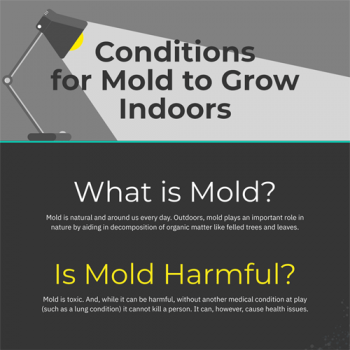 conditions-mold-to-grow-indoors-fimg