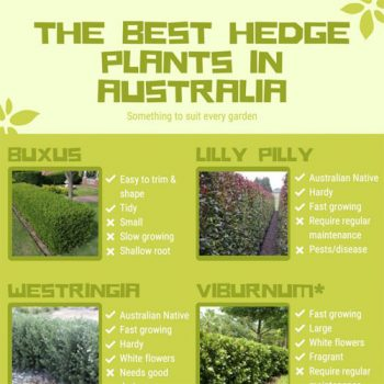 best-hedge-plants-in-australia-fimg