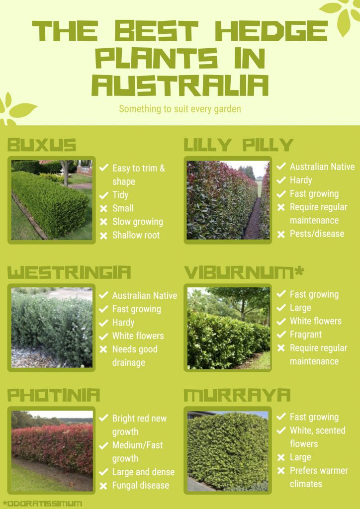 The Best Hedge Plants In Australia