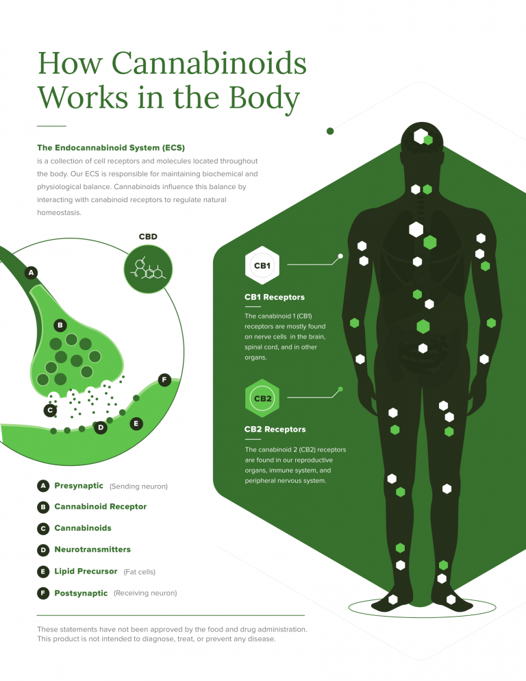 How Cannabinoids Works in the Body