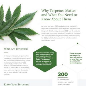 the-importance-of-terpenes-fimg