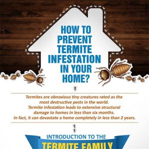 how-to-prevent-termite-infestation-in-your-home-fimg