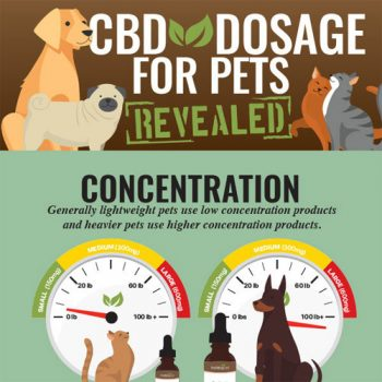cbd-dosage-pets-fimg