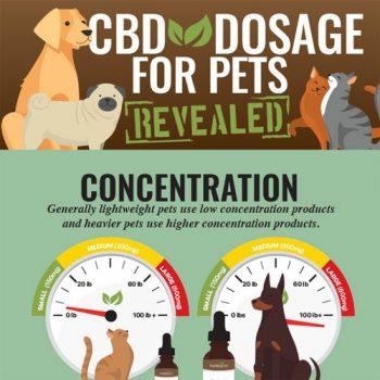 cbd-dosage-pets-fimg