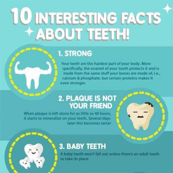 interesting-facts-about-teeth-infographic