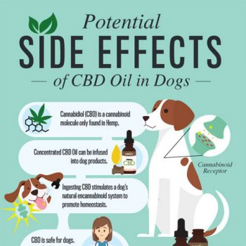 potential-side-effects-cbd-dogs-fimg