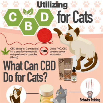 utilizing-cbd-for-cats-fimg