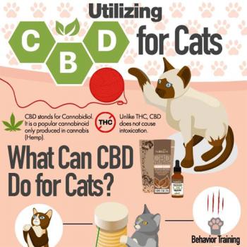 utilizing-cbd-for-cats-fimg