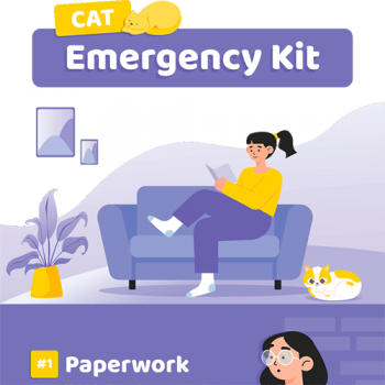 cat-emergency-kit