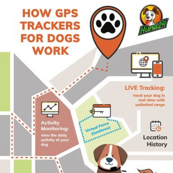 how-gps-trackers-for-dogs-work-fimg