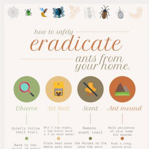 safely-eradicate-ants-from-your-home-fimg