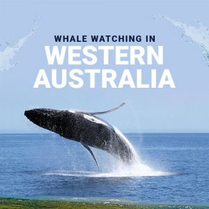 whale-watching-in-western-australia-fimg